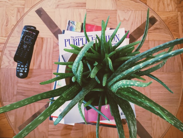 House Plant Love